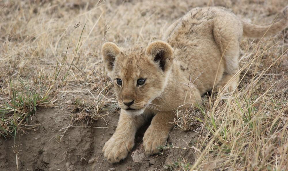 Luxury Safari Holidays Zimbabwe